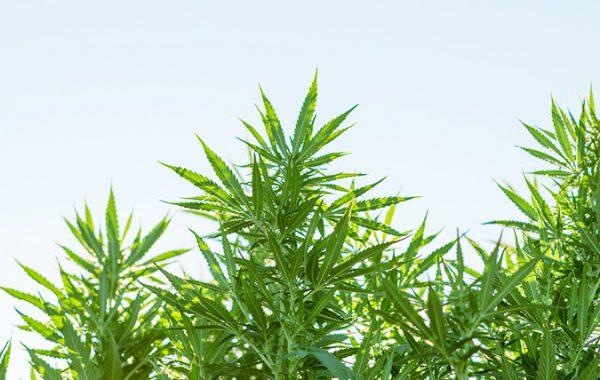 US Farm Bill: What's Next for Hemp, CBD, and Cannabis?